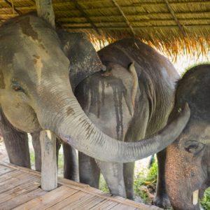 Apprenez sur les éléphants